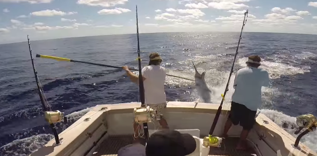 Insane Blue Marlin Jumps in Boat