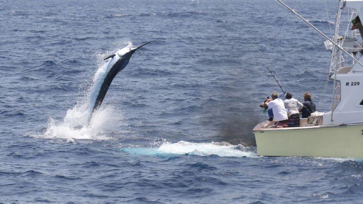 2017 Billfisheries of the Year – #2 Cape Verde