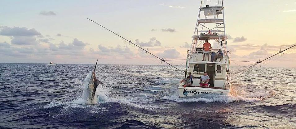 2017 Billfisheries of the Year – #3 Cairns
