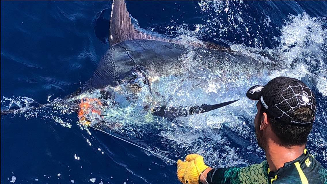 2018 Billfisheries of the Year – #8 Canary Islands
