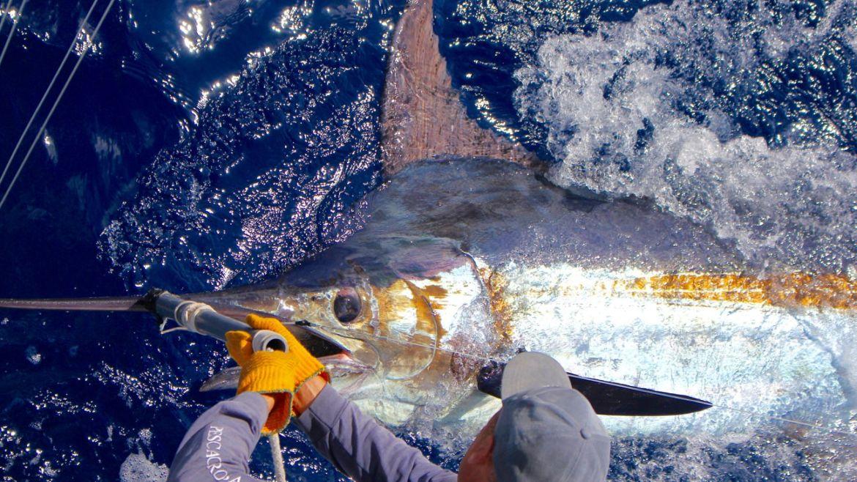 2019 Billfisheries of the Year – #5 Madeira