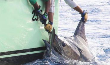 2019 Billfisheries of the Year – #1 Cape Verde
