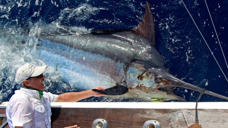 2019 Billfisheries of the Year – #10 Azores